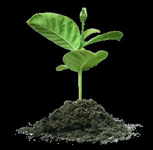 plantgrowing